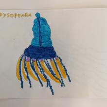 Les cartes d'identité des planctons choisis par les CM1