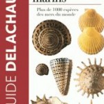 Guide des coquillages marins