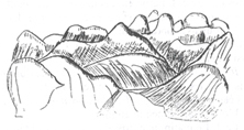 linné 4