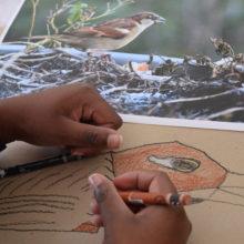 Ateliers de dessin d'observation